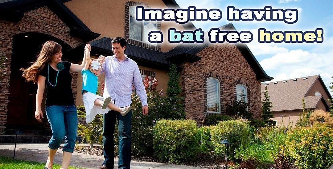 Imagine a bat free home